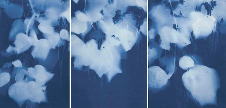 Tom Fels (b. 1946), Catalpa, 2014. Unique cyanotype triptych. Each imagesheet approximately 35 x 23 in. (90.8 x 60.4 cm.) Estimate £4,000-6,000. This work is offered in Photographs on 20 May at Christie's in London