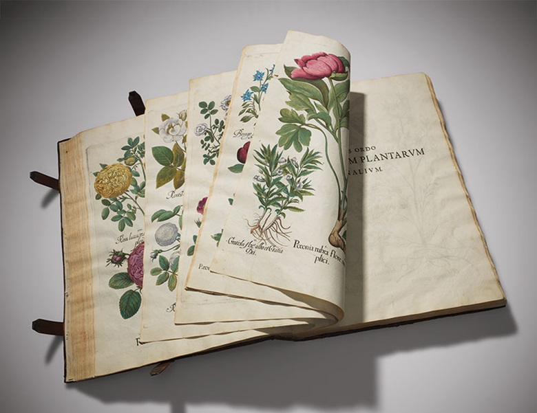 Basilius Besler (1561-1629), Hortus Eystettensis, [Nuremberg] 1613. Estimate £800,000-1,200,000. This lot is offered in Valuable Books and Manuscripts on 13 July 2016 at Christie's in London, King Street