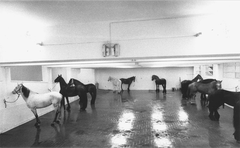 Jannis Kounellis, Untitled (12 Horses), L'Attico di via Beccaria, January 1969. Courtesy Fabio Sargentini — L'Attico Archive. Photo Claudio Abate