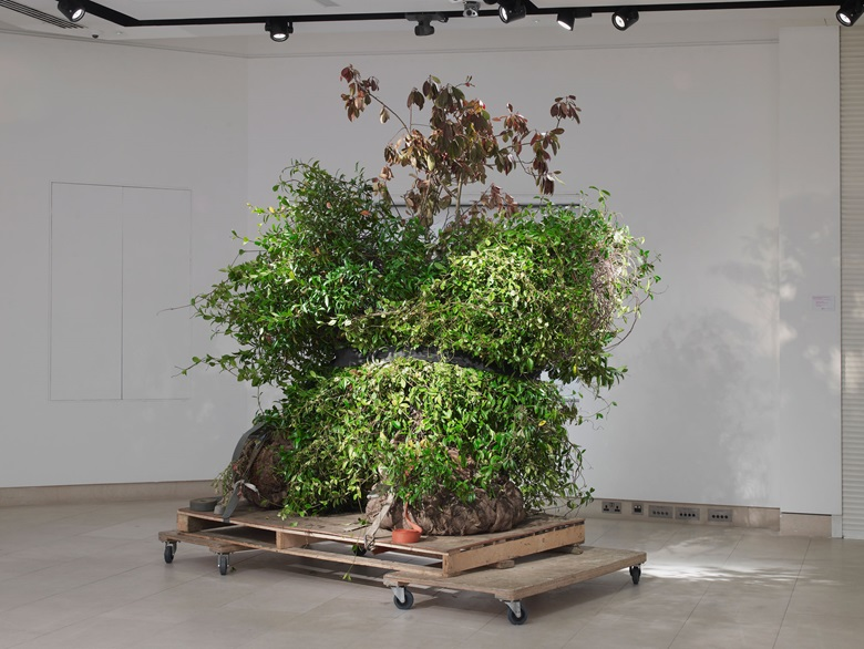 Alex Mullins & Amy Petra Woodward, Jasmine. Trachelospermum jasminoides and mixed media