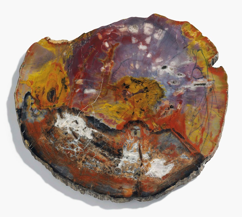 A slice of petrified wood. Northern Arizona. 14 in (36 cm) wide. This lot was offered in Science & Natural History on 27 April 2017 at Christie's in London and sold for £1,250