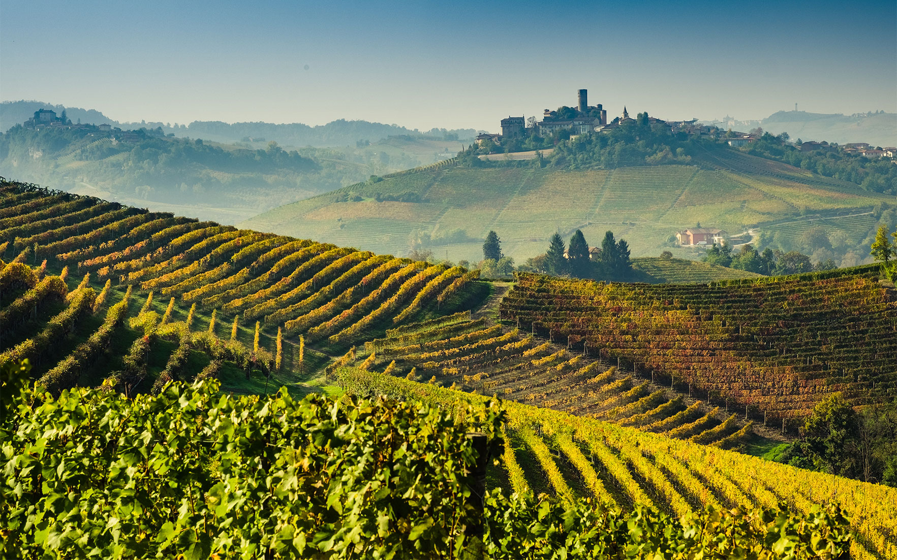 Collecting guide: Barolo and B