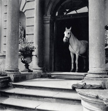 Moti, Penelope Betjeman's Arab stallion, arrives at Faringdon for tea and his portrait sitting