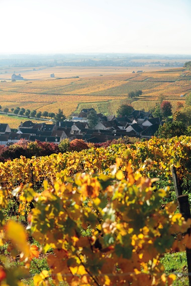 A view across the legendary vineyards of Chambolle-Musigny