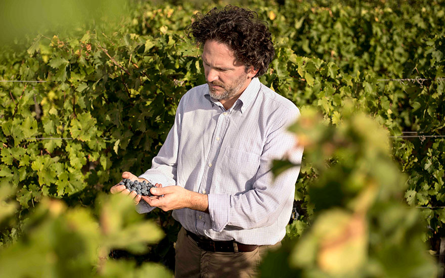 Axel Heinz in the vineyard at Masseto