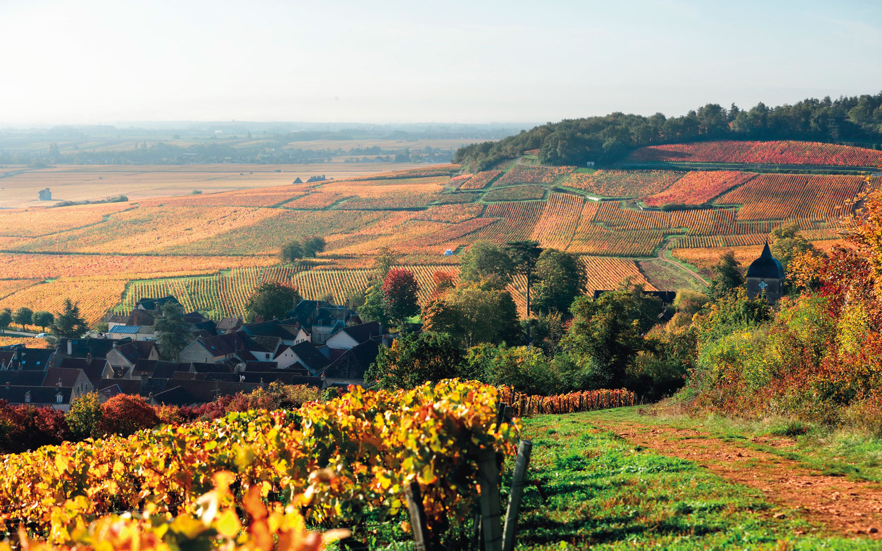 Who makes the best burgundy The domaines to know and collect