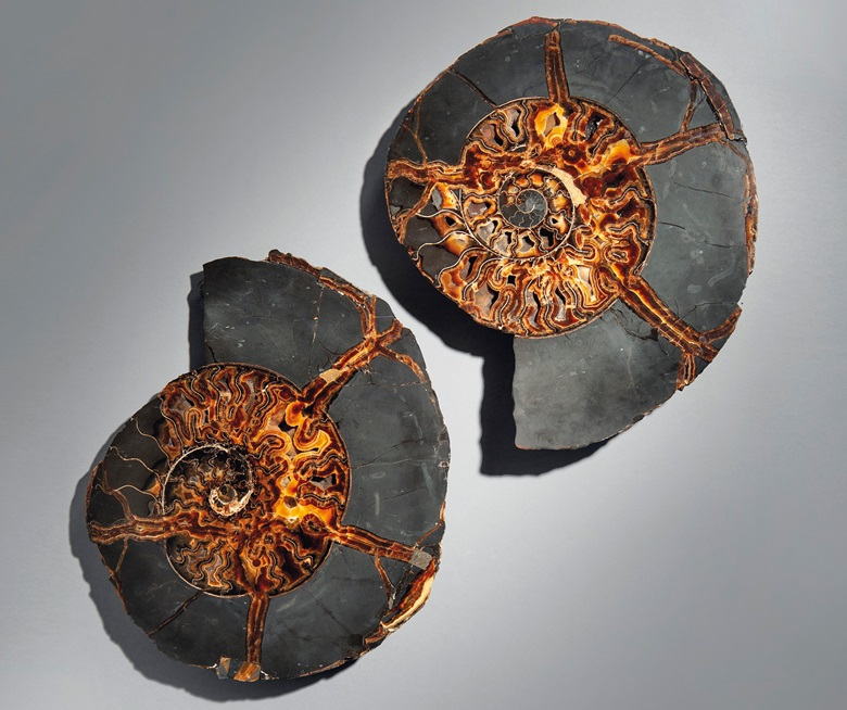 A very large split ammonite, Volga River, Russia. 21 in (54 cm) wide (each). Estimate £2,000-3,000. Offered in Sculpted by Nature Fossils, Minerals and Meteorites, 4-21 May 2020, Online