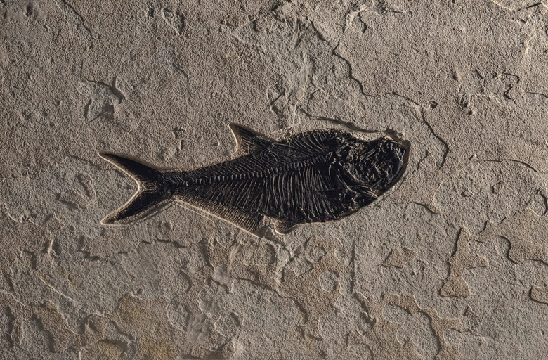 A fossil fish plaque, Green River, Wyoming. 36 x 48 in (92 x 122 cm). Estimate £4,000-6,000. Offered in Sculpted by Nature Fossils, Minerals and Meteorites, 4-21 May 2020, Online