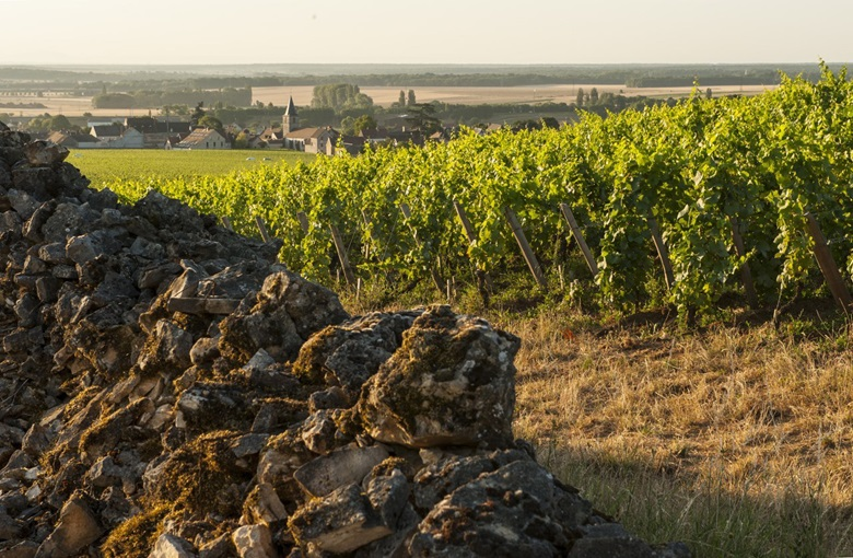 Cros Parantoux at Vosne-Romanée, with a wall of rocks that Henri Jayer cleared from the vineyard himself. On the left of the wall is Richebourg. Photo © Jon Wyand