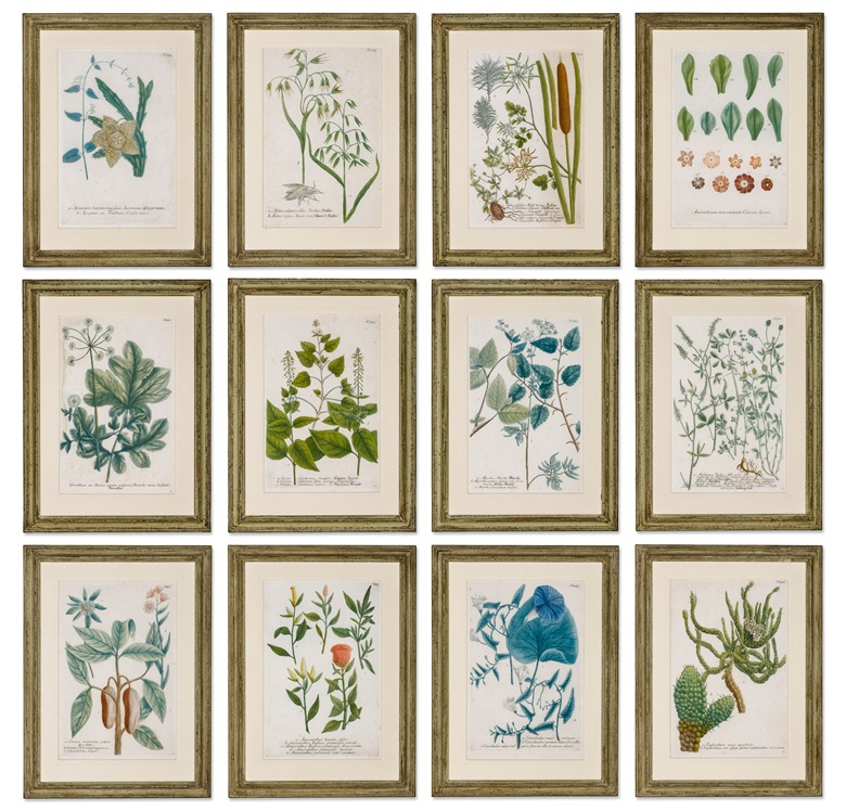 A set of 12 hand-coloured engravings of botanical specimens, 19th century. Each 18½ x 14 in (47 x 35.5 cm), framed. Estimate £2,000-2,500. Offered in Alexandra Tolstoy An Interior by Sibyl Colefax & John Fowler, 4-25 November, Online