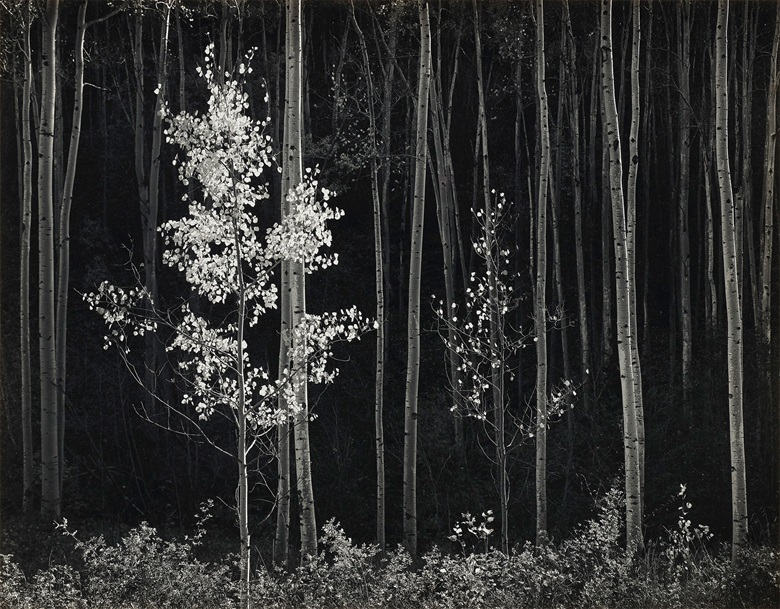 Ansel Adams (1902-1984), Aspens, Norther New Mexico, 1958. Gelatin silver print, mounted on board. Imagesheet 15 x 19¼ in (38 x 48.9 cm); mount 19⅞ x 23¾ in (50.4 x 60.3 cm). Estimate $25,000-30,000. Offered in Ansel Adams and the American West, 25 March-8 April, Online