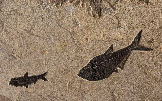 How to collect fossil fish (an auction at Christies