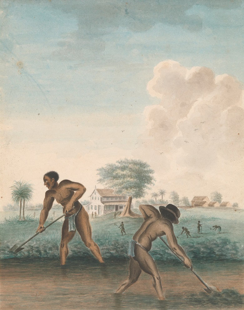 Anonymous, Enslaved Men Digging Trenches, c. 1850. Rijksmuseum, purchased with the support of the Johan Huizinga FondsRijksmuseum Fonds