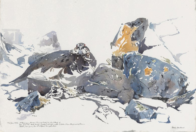 Darren Woodhead (b. 1971), Two ptarmigan; peregrine falcon; ptarmigan. 15⅛ x 22½ in (38.5 x 57.2 cm). Estimate                    £1,200-1,800. This lot is offered in The Astor Collection from Tillypronie, Aberdeenshire Part II, 4-18 December 2017, Online