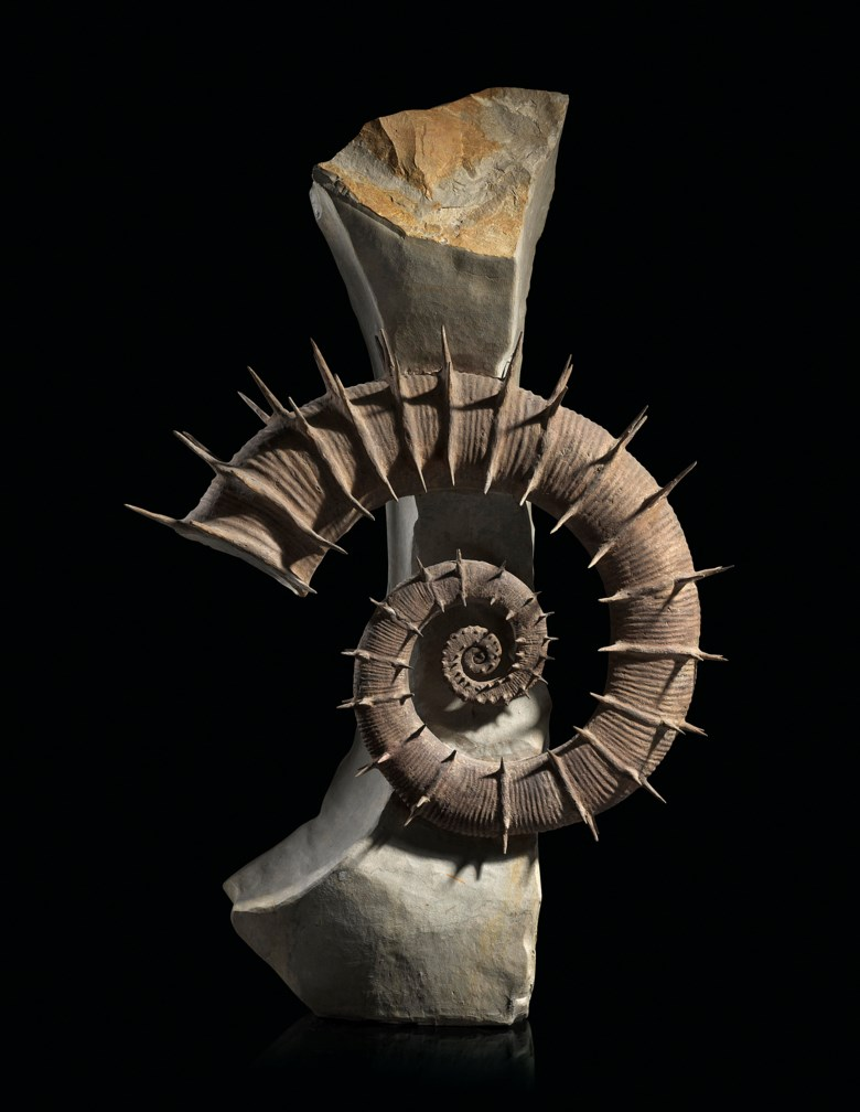 A fine uncoiled spiny ammonite, France. 24 x 16 x 7 in (61 x 40.5 x 17.5 cm). Estimate                    £30,000-50,000. This lot is offered in Sculpted by Nature Fossils, Minerals and Meteorites, 10-17 April 2018, Online
