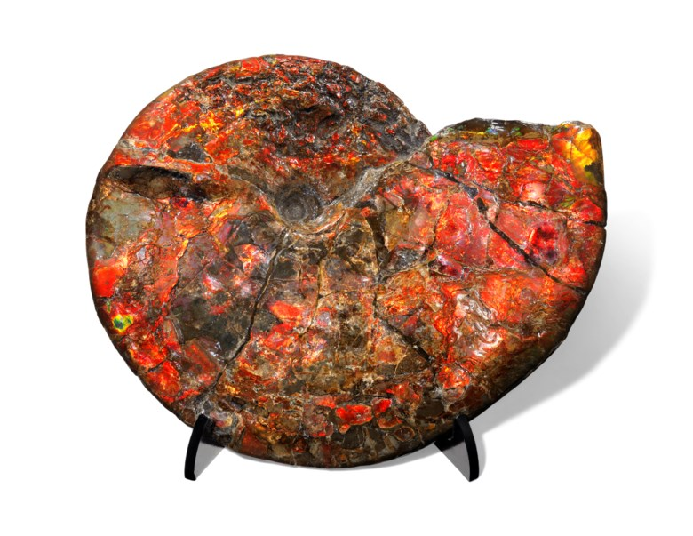 A large iridescent ammonite, Canada. 24½ x 20 x 4 in (62 x 51 x 10 cm). Estimate £15,000-25,000. This lot is offered in Sculpted by Nature Fossils, Minerals and Meteorites, 1-8 November 2018, Online